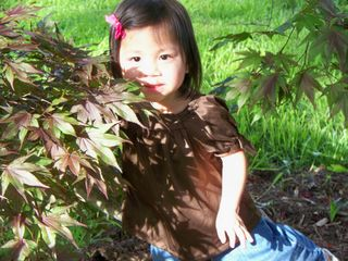 Alayna tree 2 MD 2009
